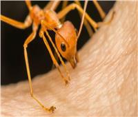 علماء يكشفون سر لدغات النمل «المؤلمة».. وعلاقتها بالزنك