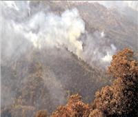 الجزائر.. اعتقال 30 شخصاً على خلفية إشعال حرائق الغابات
