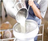 تحذير: الحليب السايب.. يجمعه الفلاحون عشوائياً ويفسد سريعاً