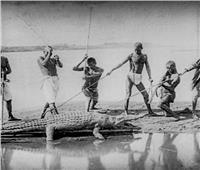 7 رصاصات تنهي مطاردة الفلاحين مع «تمساح النيل» في الستينيات