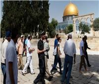 117 مستوطنًا إسرائيليًا يقتحمون المسجد الأقصى