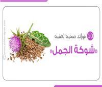 إنفوجراف| 10 فوائد صحية لعشبة «شوكة الجمل»