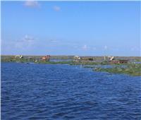 بحيرة المنزلة: إزالة 35 ألف فدان تشمل تعديات وورد نيلي | فيديو