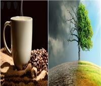 علماء: السكر والقهوة مهددان بالفناء بسبب تغير المناخ