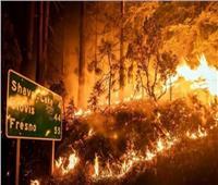 تغطية أشجار قديمة ببطانيات مقاومة للنيران لمكافحة الحرائق