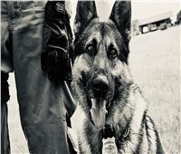 اضحك مع الكلب البوليسي.. تعرف على وكيل النيابة في حادث سرقة !