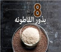 إنفوجراف| 8 فوائد لبذور «القاطونة»
