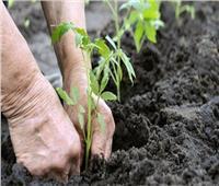 الزراعة العضوية| تنقية للتربة من السموم ومحاصيل صحية للمستهلك