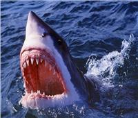 طائرات «الدرون» حل استراليا لمكافحة هجمات أسماك القرش