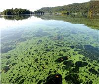 علماء: «الحساء السام» قد يسبب أسوأ انقراض جماعي على الأرض