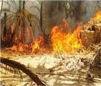 حريق هائل يلتهم مزرعة بالشرقية ونفوق 22 رأس ماشية