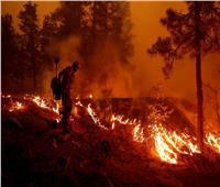 ارتفاع معدلات الوفاة العالمية والسر في حرائق الغابات