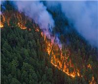 حرائق الغابات تتسبب في 7 آلاف حالة وفاة سنويا