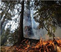 احتواء حريق غابات كاليفورنيا يؤدي إلى نزوح الآلاف