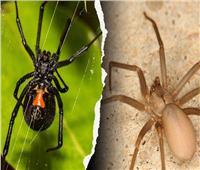 5 طرق سحرية للتخلص من العناكب في المنزل