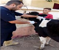 50 قافلة بيطرية لفحص وعلاج 37462 حيوان