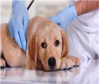 نصائح منزلية.. 5 أمراض شائعة تعاني منها الكلاب
