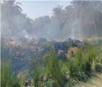 صور  السيطرة على حريق بأشجار النخيل بقرية أبوالريش في أسوان