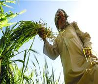 بالإنفوجراف.. تفاصيل أنشطة وجهود مديريات الزراعة والطب البيطري بالمحافظات
