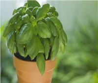 دراسة: اكتشاف مركبًا طبيعيًا في النباتات يساعد في الحماية من «الزهايمر»