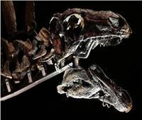 اكتشاف أقدم ديناصورفي العالم بالمغرب.. عمره 168مليون سنه
