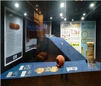 بحضور السفير الياباني.. افتتاح معرض «خبايا الذهب» بالأقصر  صور