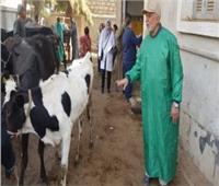 محافظ أسيوط:قافلة بيطرية مجانية بقرية المشايعة ضمن«حياة كريمة»