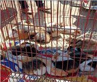 الحبس والغرامة.. تعرف على عقوبة بيع الحيوانات البرية