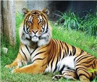 «نمر» يكشف عن جنس المولود في حفلة