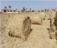 «45» محضر ضد مرتكبي حرق قش الأرز بالشرقية
