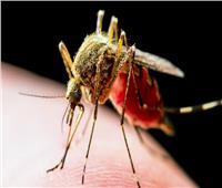 البعوض من أخطر الحشرات حول العالم .. يقتل 750 شخصاً سنويا