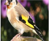 مهددة بالانقراض.. الطيور في أوروبا في خطر
