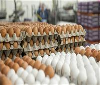 الزراعة: توفير أطباق البيض بأقل من 50 جنيهًا خلال أيام  فيديو