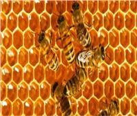 عسل النحل  نصائح لا غنى عنها للمربيين قبل الشتاء