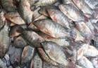 نرصد أسعار الأسماك بسوق العبور..والبلطي يسجل 25 جنيها