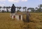 """""""الزراعة"""": استمرار حصاد محصول القمح بدمياط.. والتوريد لم يبدأ بعد"""