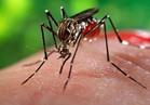 البرازيل تنهي حالة الطوارئ الطبية في أعقاب انحصار فيروس زيكا
