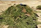 الجيش الثالث يضبط وكرا لتكفيريين بوسط سيناء و9 مزارع مخدرات