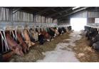 طرح 83 ألف طن لحوم ودواجن واستيراد 12 ألف رأس ماشية