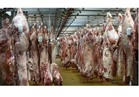 الخدمات البيطرية تواصل الرقابة علي اسواق اللحوم والدواجن لاستقبال رمضان