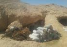 ضبط فردين مشتبه بهما ورشاش متوسط وكمية من الذخائر بوسط سيناء