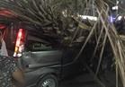 سقوط شجرة على سيارتين بشارع الجيش في الوايلي