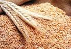"""""""السلع التموينية"""" تنفي اتخاذ مصر قرار بوقف وارداتها من القمح الفرنسي"""