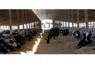 بدء مشروع المليون رأس ماشية بـ 200 ألف للحفاظ على الثروة الحيوانية