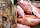 التموين تطرح أسماك ولحوم ودواجن بأسعار مخفضة في العيد
