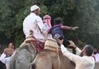 ركوب الجمال والأحصنة ..متعة احتفال أطفال الوادي الجديد في العيد