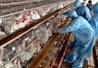 «الزراعة» تواصل تنفيذ الإجراءات الاحترازية لمواجهة إنفلونزا الطيور