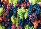«الزراعة» الاتحاد الأوروبي يرفع الفحوصات الإضافية عن العنب المصري