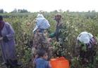 """الوزراء ينفي وقف تصدير """"العنب والفراولة"""" للأسواق الخارجية"""