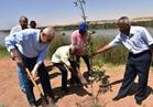 زراعة 535 شجرة بكورنيش أسوان الجديد